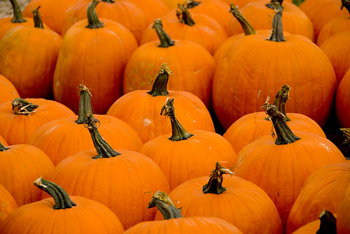 FarmersMaket2008 Pumpkins