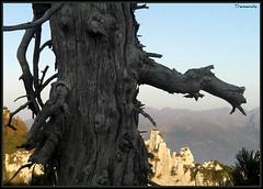 secarolo... (tremendo2008) Tags: montagne asiago fossetta