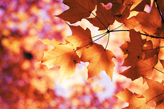 (Lee_Bryan) Tags: autumn newyork leaves canon maple bokeh centralpark hbw