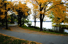 autumn back home (iMatthew) Tags: autumn trees fall leaves yellow boston gold golden charlesriver foliage esplanade bostonist universalhub bostonsesplanade