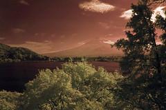 Mt. Fuji with Red Sky over Lake Kawaguchi (aeschylus18917) Tags: infrared japan yamanashi kawaguchilake nature fuji mtfuji fujiyama surreal kawaguchiko nikon d70 danielruyle aeschylus18917 danruyle druyle 赤外線 ir landscape scenery nikond70 sky tree ダニエルルール ダニエル ルール mountfuji 富士山 fujisan yamanashiprefecture 山梨県 yamanashiken lake mountain lakekawaguchi 河口湖 pxt