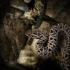 The Serpent and the File (tinygdynamite) Tags: texture earth snake grain northamptonshire file amour layers noise attacking oundle digitalcameraclub insensible tinygdynamite