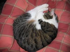 Brodie curled