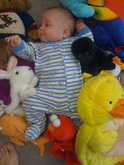 Ben and the stuffed animals