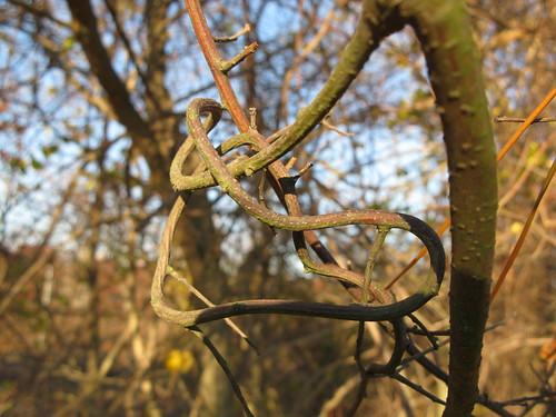 vine knot