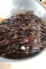 Fried Tarantulas