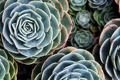 (Katie Thompson) Tags: plants flower macro up 50mm close farm 14 lavender maui kauai alii kula