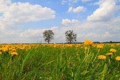 IMG_4525 (buddy adams) Tags: sky canon eos wiese himmel wolken sigma 7d grn blau landschaft baum rasen