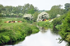 River at Shugborough from Essex Bridge