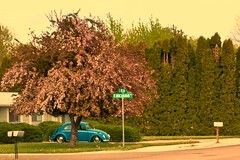 Beetles of Boise Postcard (Slow Little Photo) Tags: street blue postprocessed tree car vw mailbox botanical landscaping beetle mailboxes idaho boise vehicles saturation vehicle picnik beetlebug