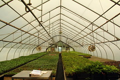 Greenhouse-HBrook-June2011 (Carlos L. Yordan) Tags: green herbs farm greenhouse organic penningtonnj