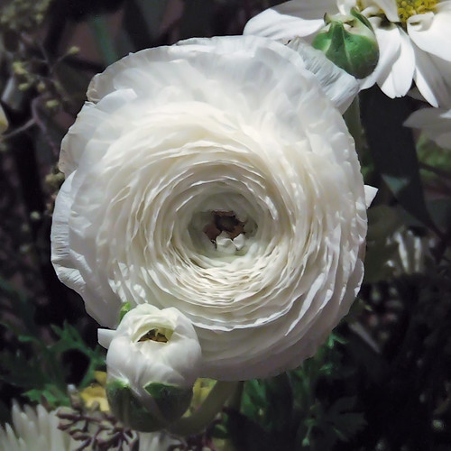 Ritz-Carlton Hotel, in Clayton, Missouri, USA - unusal white flower