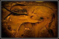 Zoo de Barcelona (Jose Luis Mieza Photography) Tags: barcelona animal private zoo spain draw privado benquerencia fineartphotos reinante platinumphoto impressedbeauty jlmieza multimegashot thedavincitouch reinanteelpintordefuego joseluismieza
