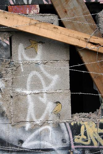 Asheville NC Graffiti, Birds and Barbwire - IMG_0537