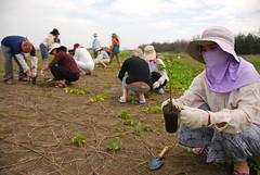 今(2007年)春天,七股植生護沙,成果豐碩