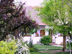 The Country House (jaca gabric) Tags: flowers trees garden spring vrt serbia blumen garten basta salas baeume countryhouse vojvodina srbija fruehling landhaus serbian prolece mokrin cvece bagrem