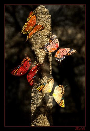 farfalle da Mel A..
