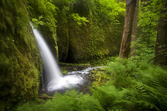 Through a Portal to Another World (Ar'alani) Tags: trees nature oregon landscape waterfall moss long cove magic difficult ferns columbiarivergorge scramble intentionalblur canon1022mm bushwhack ruckelcreek hoyamoose vision100