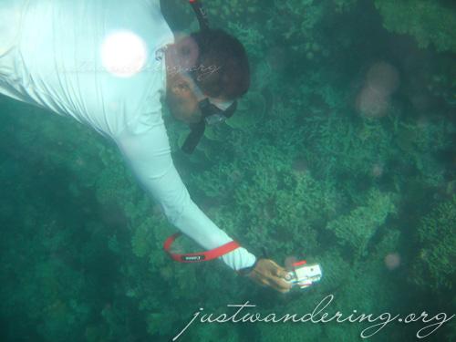 Coron, Palawan - Siete Pecados Underwater photos