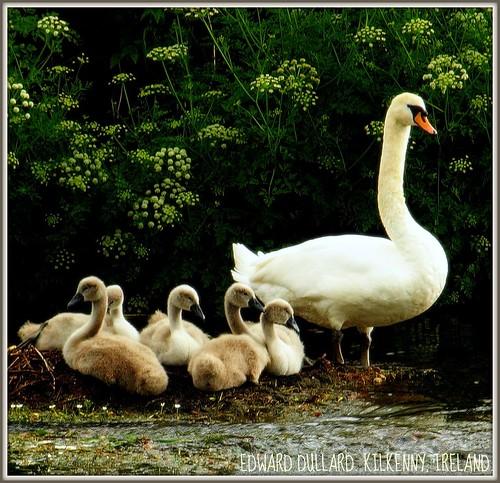 سحر الطبيعة في ايرلندا 2579259798_482425b610.jpg?v=0