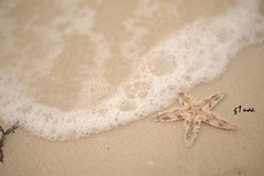 الصـيـف يــوم يجـيـك مـلــه (● Maitha ● Bint ●K●) Tags: sea summer fish beach star nikon uae g1 2008 d3