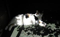 relaxing time (astrid.saeverhagen) Tags: norway cat norge katt rogaland haugesund muffen