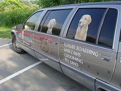 Barky's hotel had a limo, ours...not so much