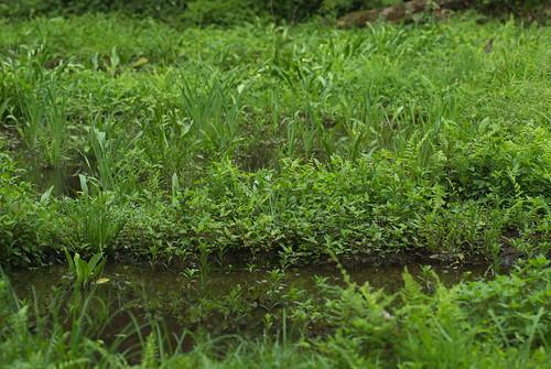 20080705032トンボの湿地