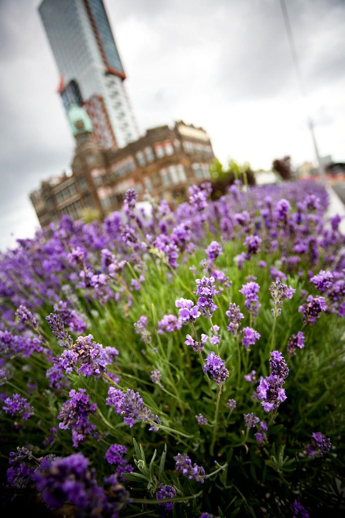 Lavender Garden @ Hotel New York, Rotterdam.