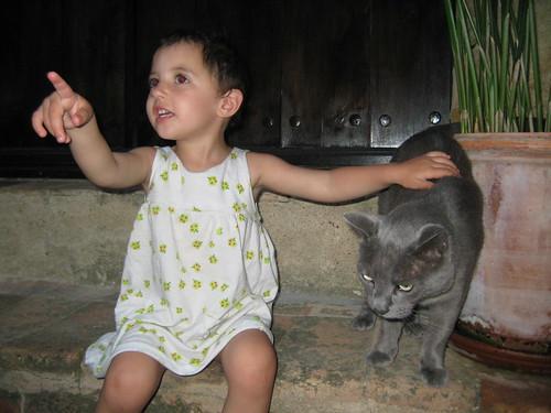 pals, gato