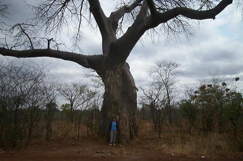 baobab seed oil