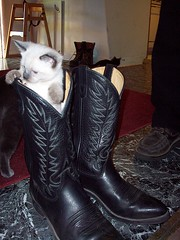 puss-in-boots (theresadentler) Tags: cats cute cat garden kitten kittens kitties