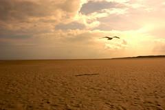 mwe (jazzodernie!) Tags: shadow sun holland sol beach netherlands clouds strand waddenzee nederland wolken playa mwe schatten friesland schiermonnikoog fryslan niederlande wattenmeer hollanda