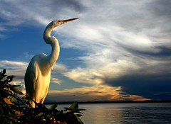 -Heron and the sunset.- (land.nick) Tags: sunset heron nature birds landscapes rainforest favorites aves excellent avian herons egrets amazonia tropicalforest naturesfinest flickrsbest fivestarsgallery platinumphoto anawesomeshot colorphotoaward impressedbeauty aplusphoto thebestphotos avianexcellence diamondclassphotographer flickrdiamond theunforgettablepictures platinumheartaward theperfectphotographer stunningskies goldstaraward flickrestrellas multimegashot qualitypixels 1000cand 1000commentsfaves llovemypics kunstplatzlinternational 100commentgroup oraclex oltusfotos grandegarabranca flickraward obramaestra sailsevenseas peregrino27newvision