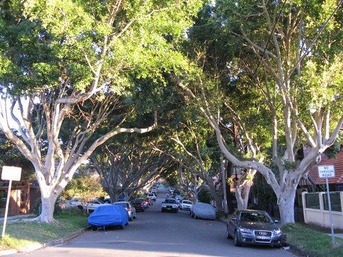 Figtree avenue