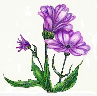 Lule te Bukura Per Vizatim Lule te Ndryshme Vizatime Kto