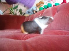 Kummitus (Random Forum) Tags: melissa tanja sohva olohuone marsu käsi kummitus leikkikaluja tyttöjenasunto