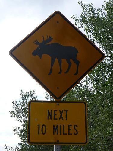 Moose !