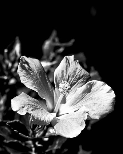 black and white flowers pictures. Black and White Flower