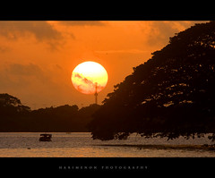 Back to glory (harimenon4u) Tags: sunset orange sun india seascape tree race landscape drive evening volvo boat marine colours ride kerala palace cochin bolgatty silhoiute