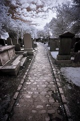 Graveyard in Aberdeen, Scotland in Infrared. (coulombic) Tags: cemetery graveyard photoshop canon ir scotland path wideangle aberdeen infrared 5d canon5d canoneos digitalinfrared falsecolor infraredfilter infraredcamera canoneos5d canonef1635f28l gabefarnsworth maxmaxcom infraredlight pathscaminhos canoninfrared converteddigitalcamera infrareddigitalphotography coulombic ldpllc canoneosinfared