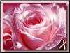 """Предпросмотр схемы вышивки  """"белая роза """". белая роза, цветок,роза,белая, предпросмотр."""
