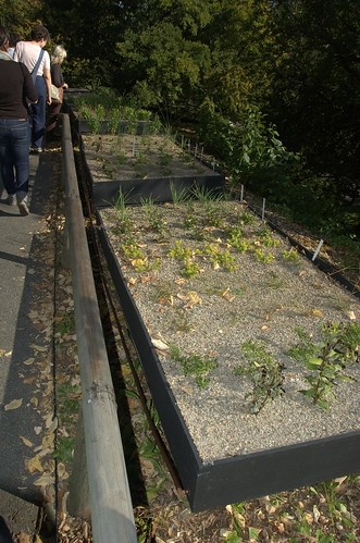 Green Roof Test Beds