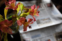 Mornings... (Madhu Gopalan) Tags: morning flowers sunlight newspaper bokeh diningtable timesofindia ihatemornings 1855bokeh
