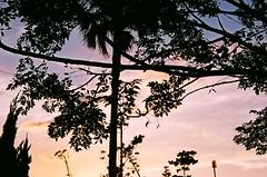 (litina_rose) Tags: natura 150 400 fujifilm classica 八里的天空 假期最後一刻 我知道我會想念這個長假 100分之一