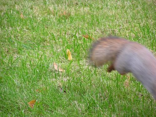 Orava karkaa kuvasta