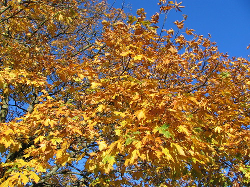 The blue sky was stunning, and the leaves in Triangle Park contrasted beautifully.