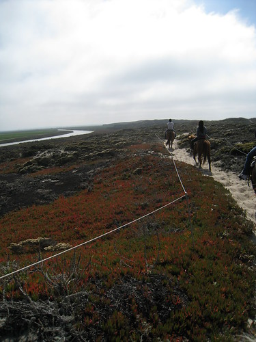 Horseback Riding in Moss Landing