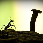 .kungfu.Ant.