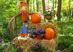 A neighbor's harvest display (Doxieone) Tags: flowers orange green fall pumpkin colorful charlotte scarecrow northcarolina lakeside hay halloweenfall2008set